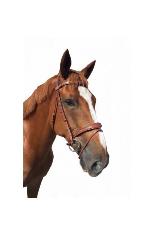 Bridon fancy cavaletti
