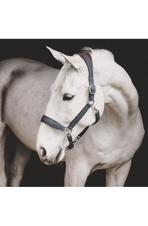 Licol Dyon pour chevaux