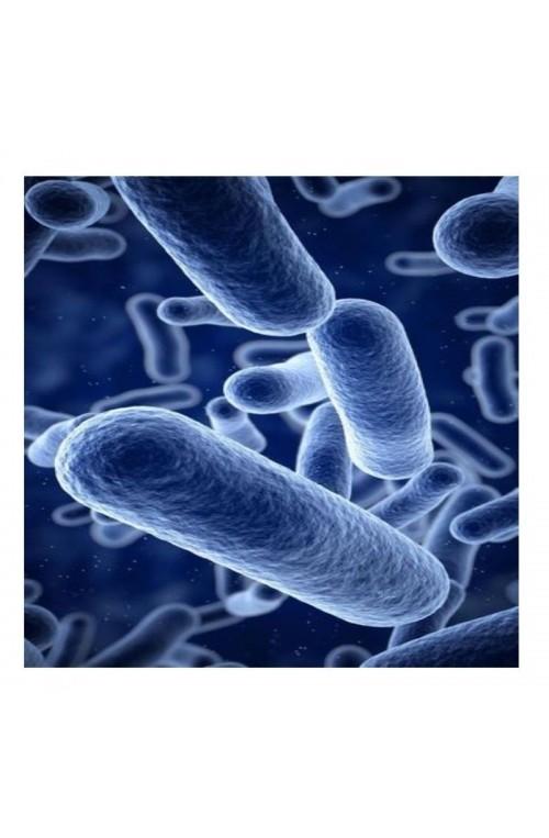 Probiotiques AJC